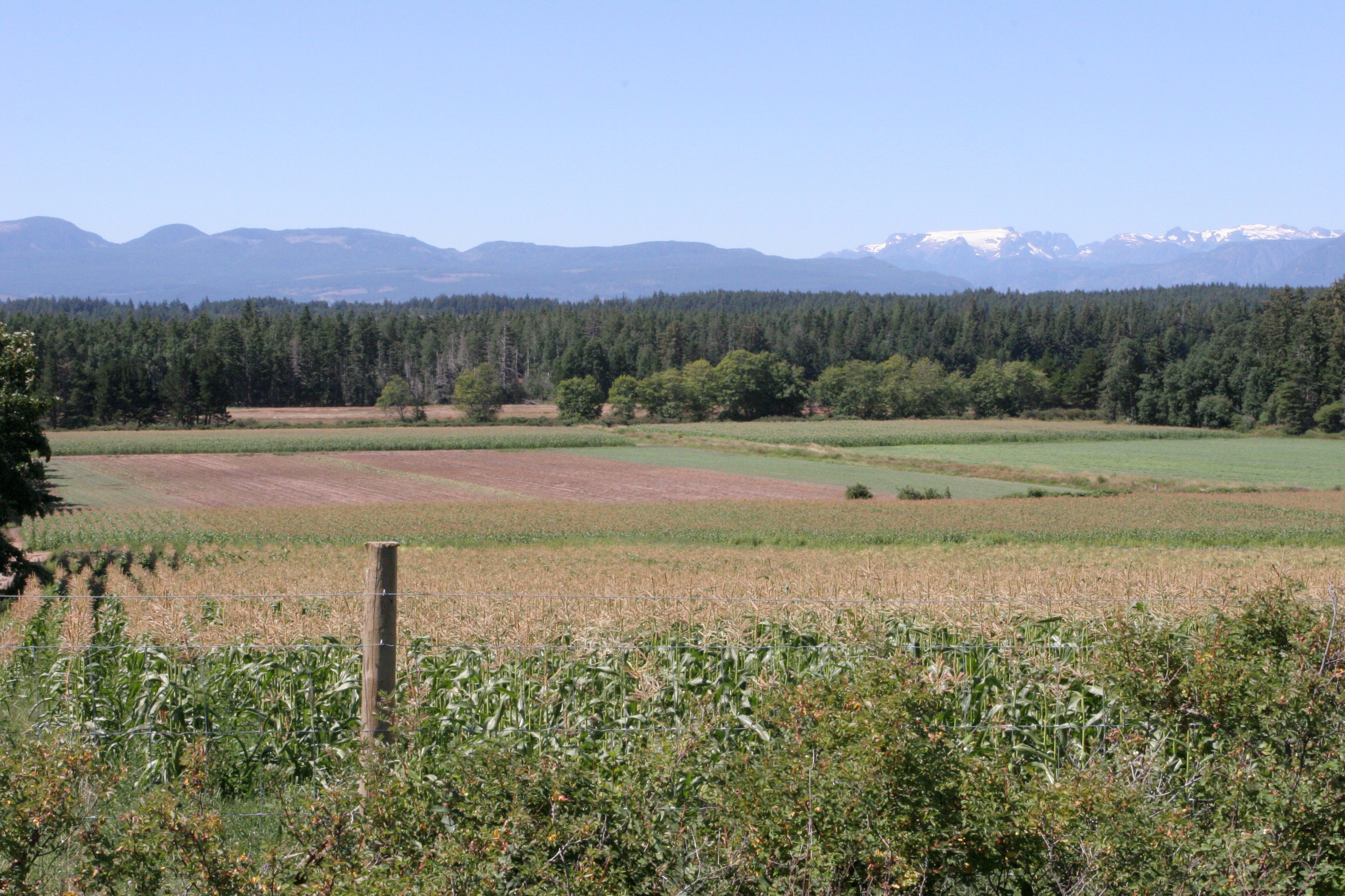 field in the Comox Valley with the glacier in the background